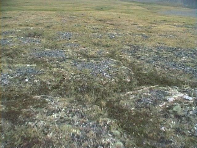 tundra essay